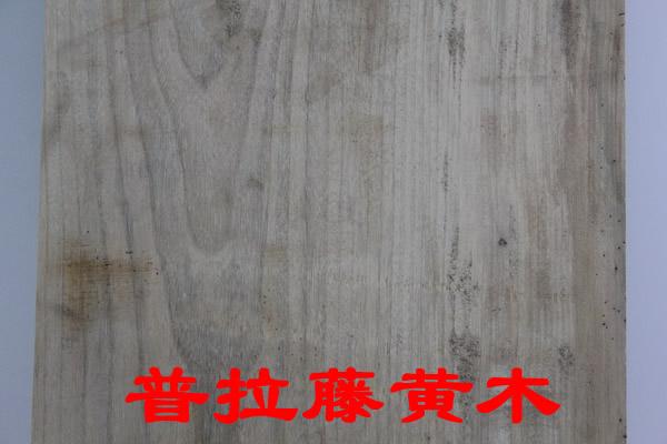 普拉藤黄木